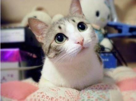 Download 97+  Gambar Kucing Rumahan Paling Lucu Gratis